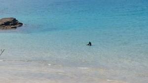 海ひとりぼっち