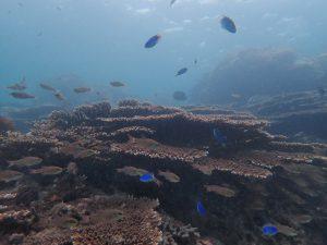 4 サンゴ