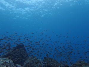 小魚いっぱい