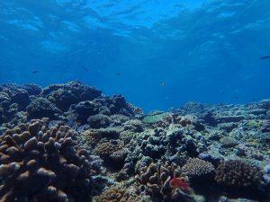 生き生きサンゴ